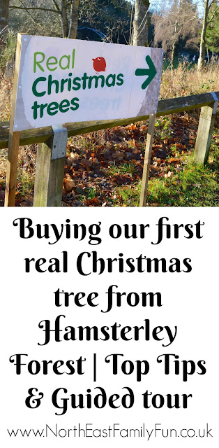 Why you should choose a real, sustainable Christmas tree from a Forestry Commission Forest (Hamsterley Forest in Durham and Kielder Forest in Northumberland)