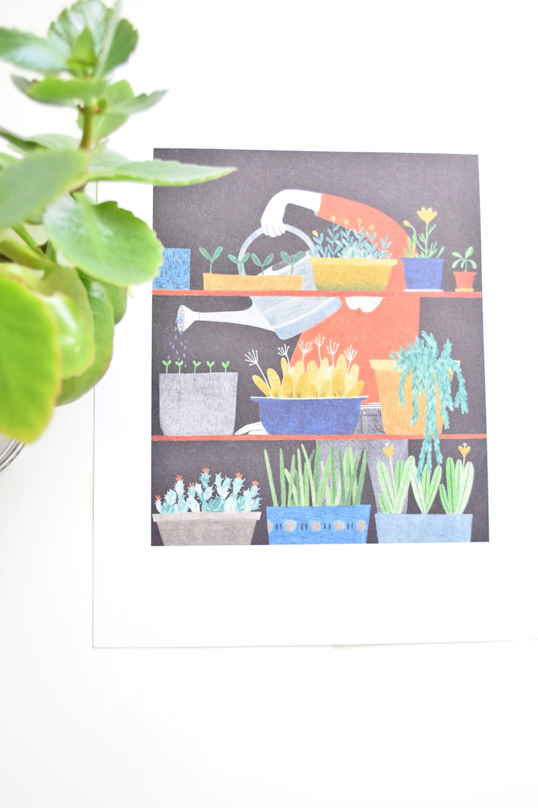 Plants at Home