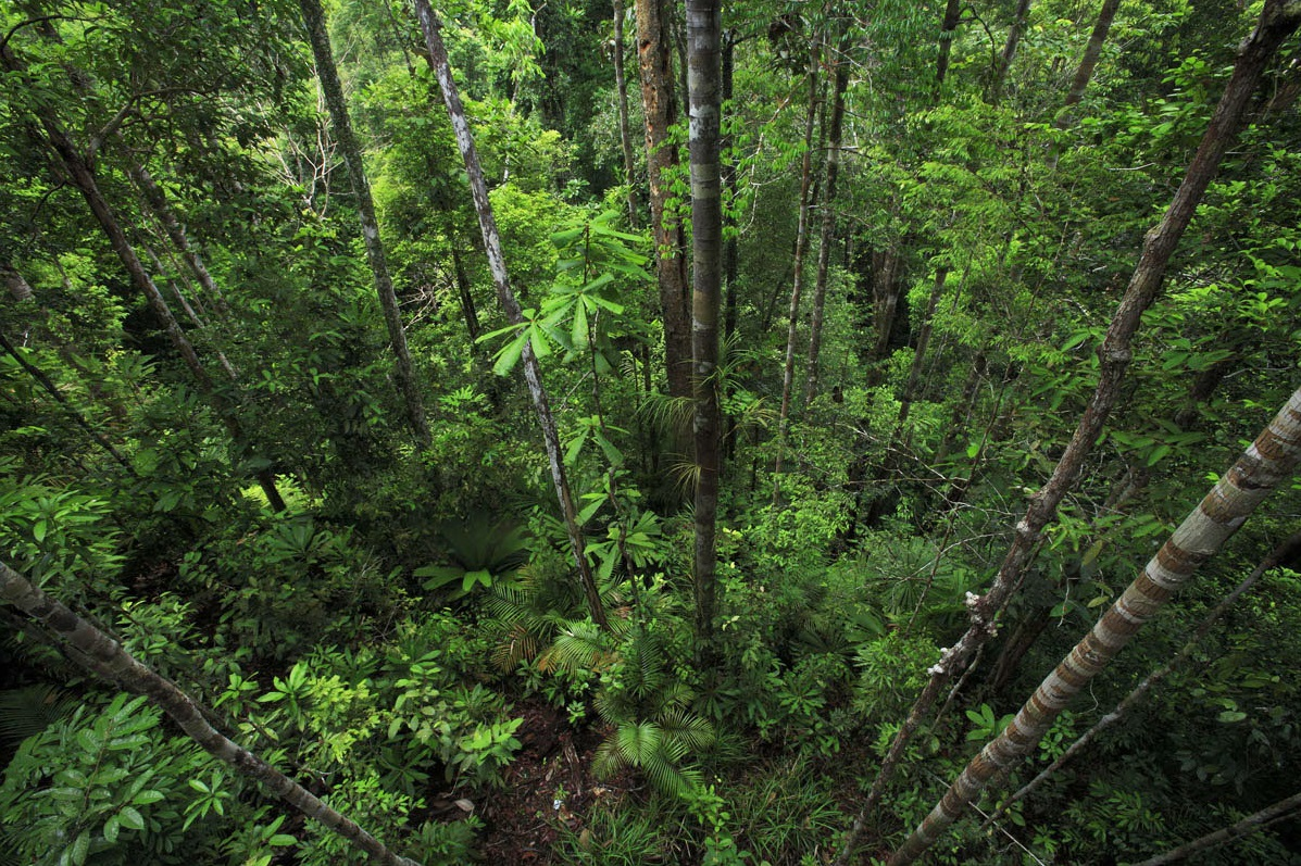 Imparare con la geografia 44 il pianeta terra le - Gli animali della foresta pluviale di daintree ...