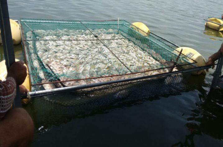 Cerca de 17 toneladas de peixe mortos são encontrados em barragem do Piauí