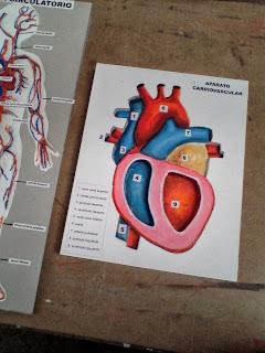 Maqueta del Corazón