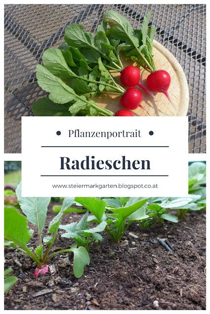 Radieschen-Pin-Steiermarkgarten