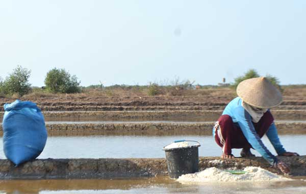 tuding impor garam dituding matikan petani lokal