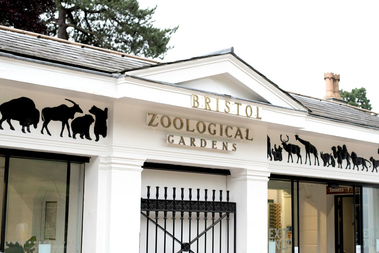 bristol zoo, bristol zoo gardens, zoo in bristol, zoo access, family day out in bristol, what to do in bristol, things to do in Bristol, bristol events, visit bristol, zoo animals, secret cinema