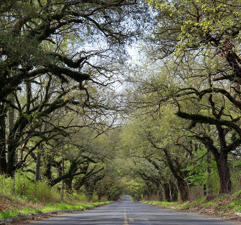 Oak Arbor Church: Photography With A Southern Accent: Photography With A