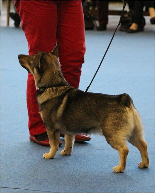 Koiranäyttely Messukeskus