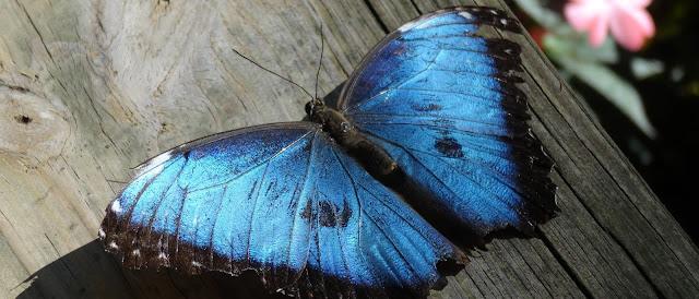 Schmetterlinge Liste Florida