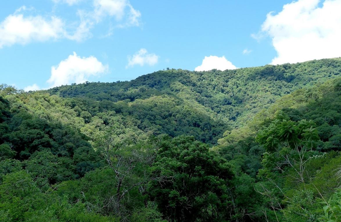 Selva Montana