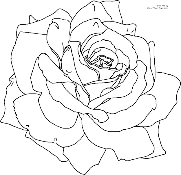 Flower Page Printable Coloring Sheets  For The   Printable Size  Click Here