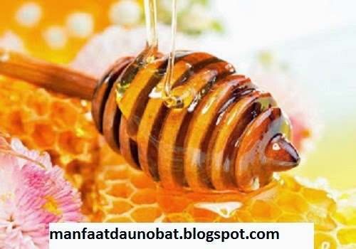 manfaat khasiat madu