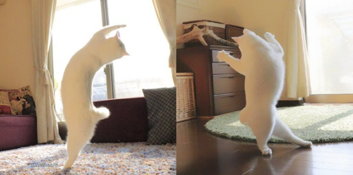 Kucing Menari Balet