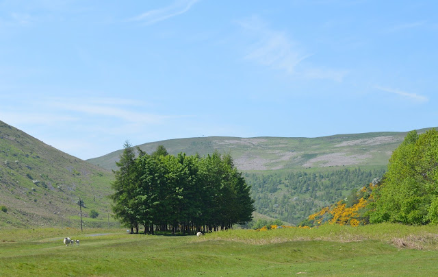 A Family BBQ at Ingram Valley, Northumberland National Park