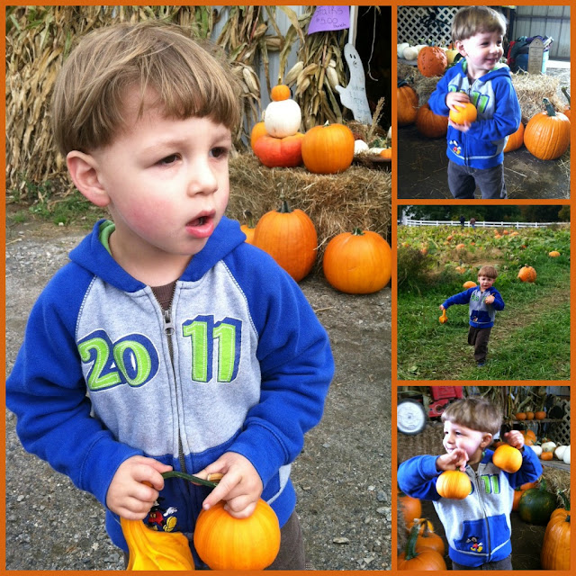 pumpkins and toddler