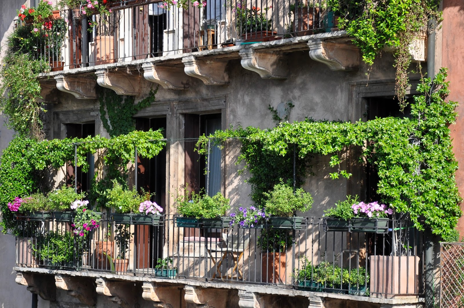 A balcony draped with greenery in Vicenza, Italy