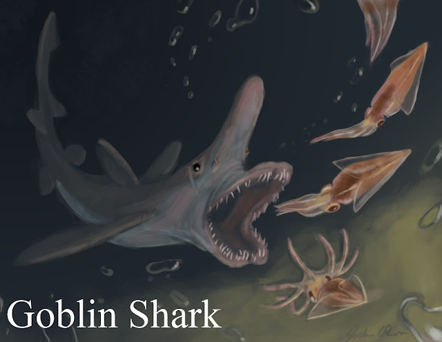 12 Facts About Goblin Sharks
