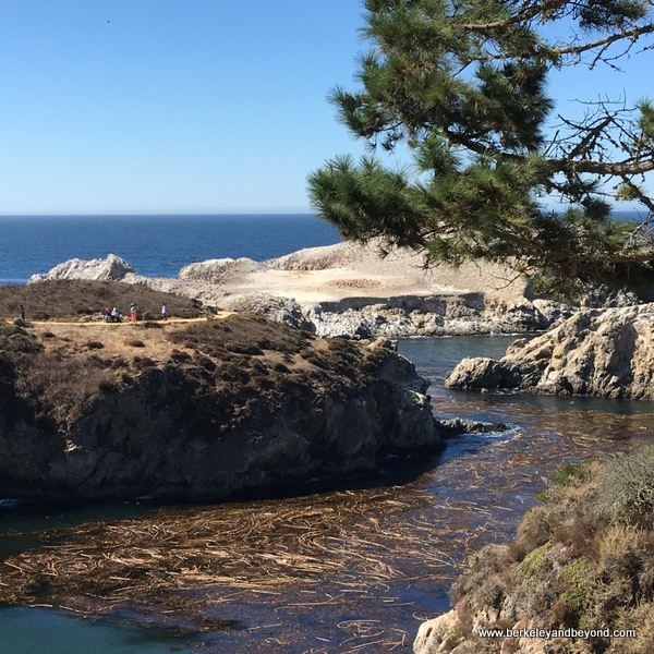 Point Lobos State Natural Reserve in Carmel, California