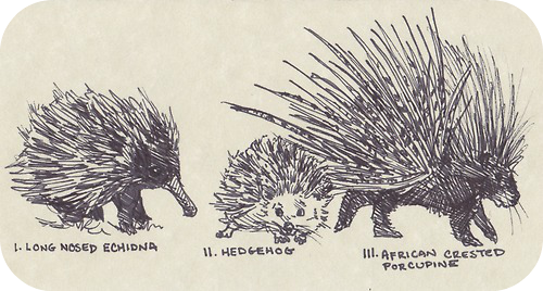 Echidna And Hedgehog