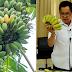 แพทย์แนะกินกล้วยน้ำว้า อึไม่เหม็น และเลือกกล้วยแบบไหนลดความอ้วนได้
