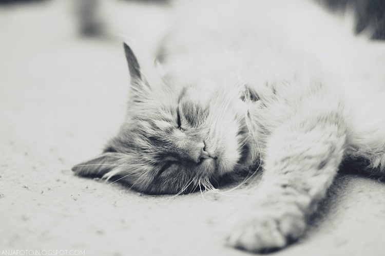 kot, koty, cat, cats, kocia fotografia, fotografia kotów