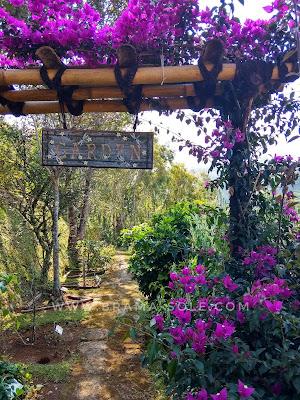 kebun bumi herbal dago