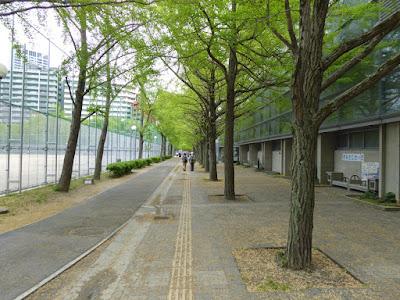 下福島公園の銀杏並木