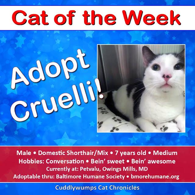 Adopt Cruelli!