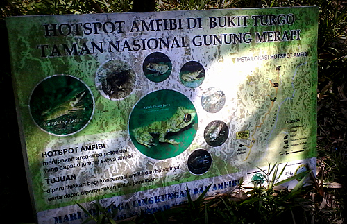 Amphibian animal sanctuary