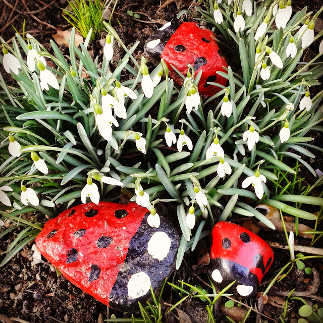 biedronki w kwiatach