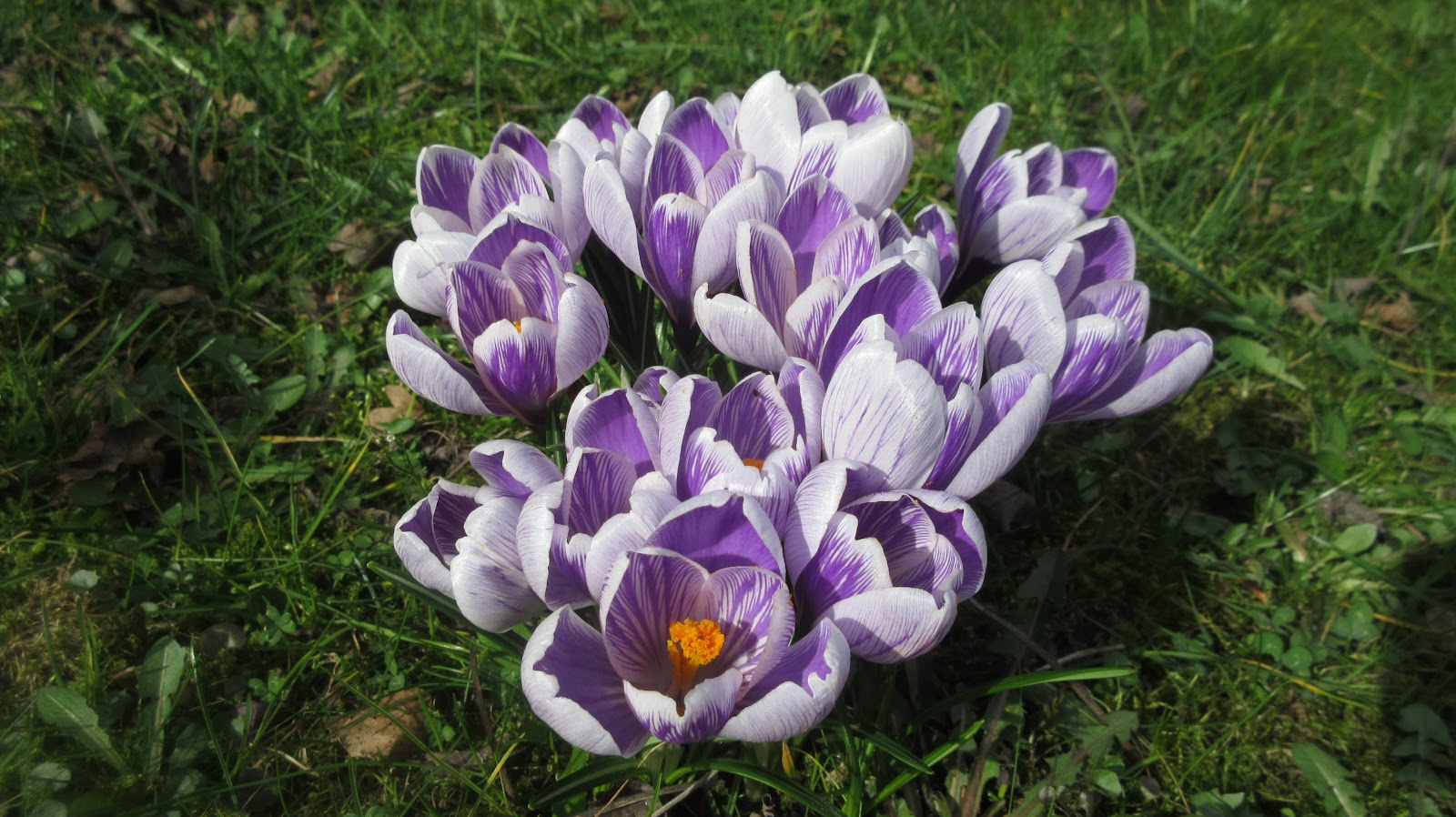 Nicole met haar leuke ideeen h mooie bloemen krokussenen - Onze mooie ideeen ...
