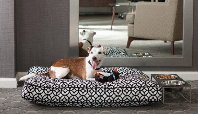 The Affinia Hotel Collection Has Boutique Hotels Across Nyc Dumont Fifty Gardens Manhattan And Shelburne Each One As Dog Friendly