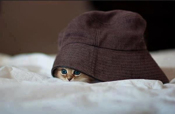 Gatito debajo sombrero