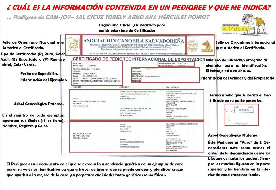 APRENDAMOS A LEER UN PEDIGREE DE ACANSAL FCI (EL SALVADOR ...