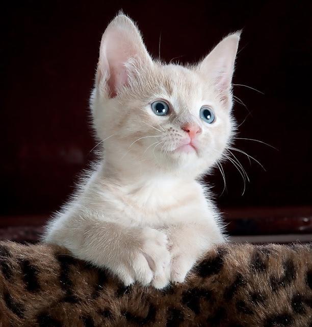 informasi seputar kucing