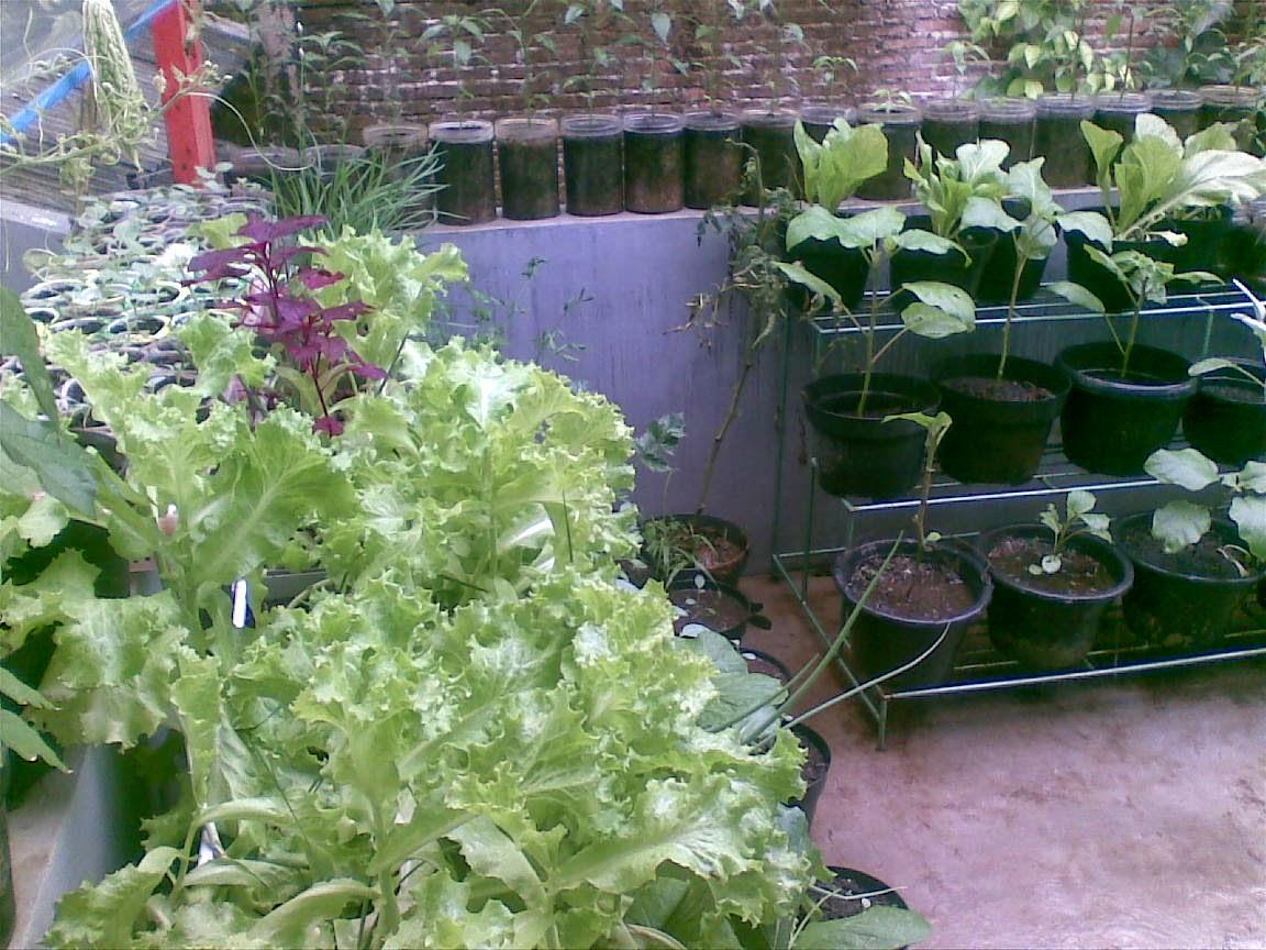 Endah Murniyati S Journey Gutter Planter For Lettuce