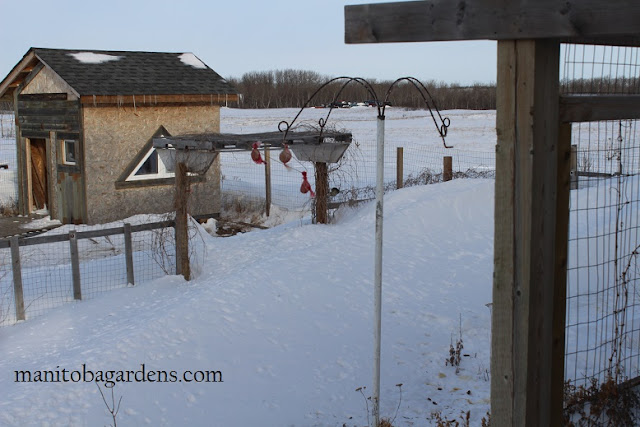 snowbanks are almost to the top of our fences