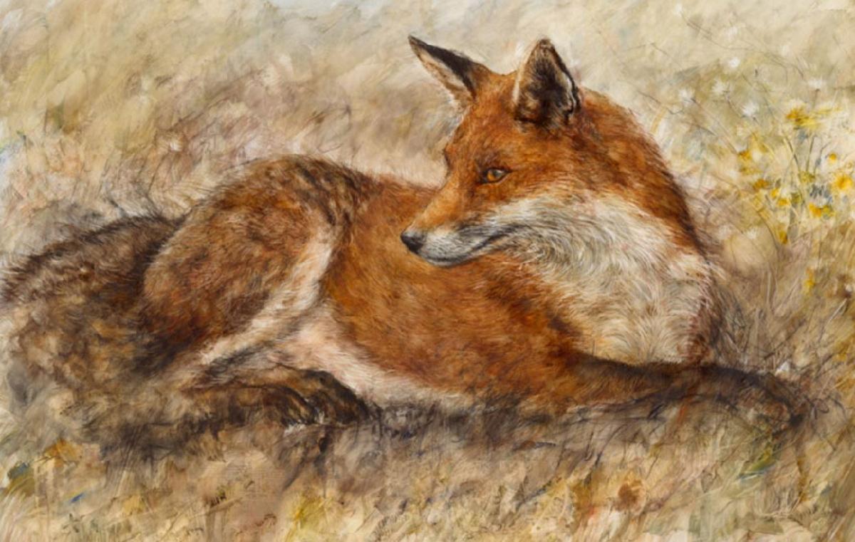 Gary  enfield Red fox waiting