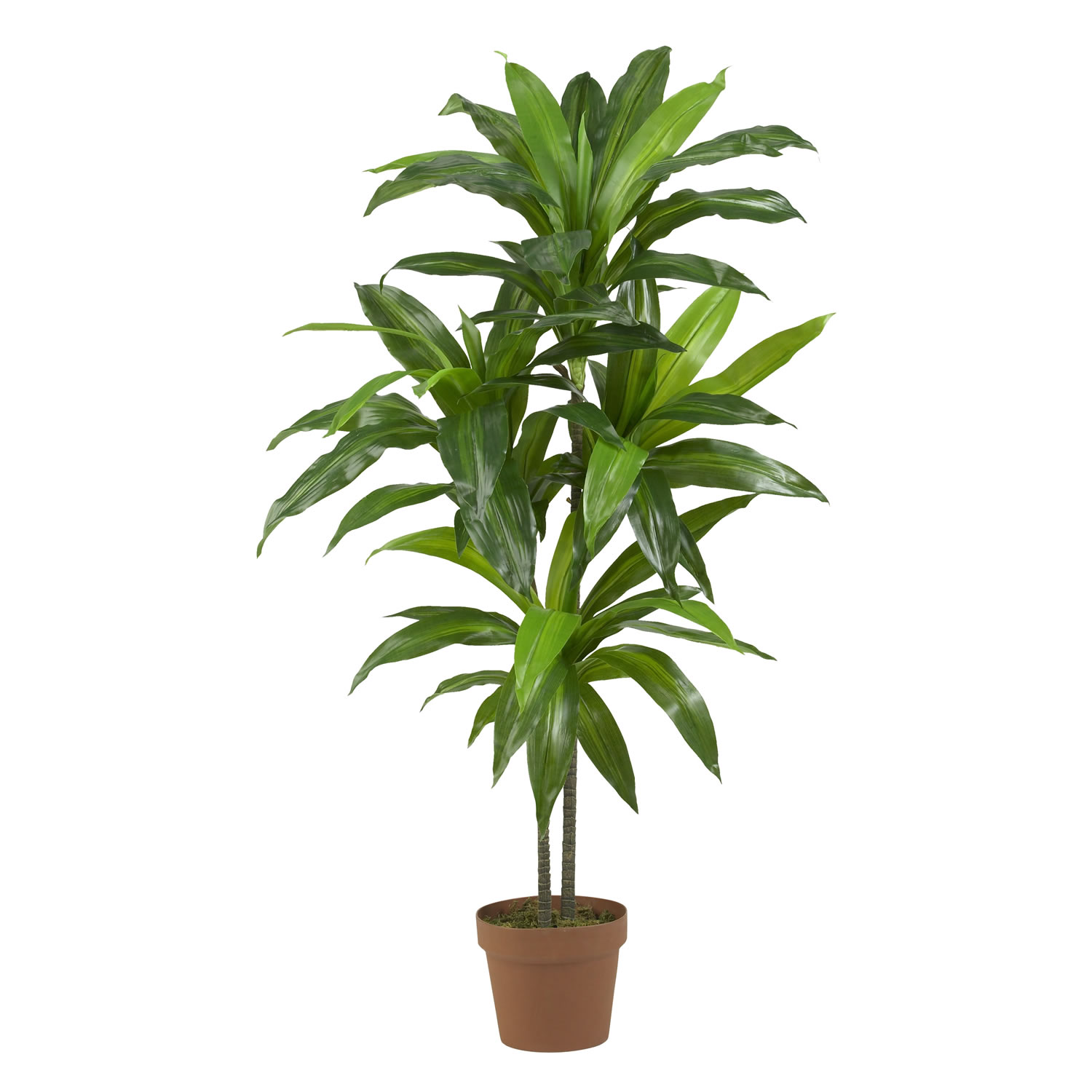 Tall Indoor Plants With Big Leaves Seahorse And Stripes Kelis Top 5 House Plants