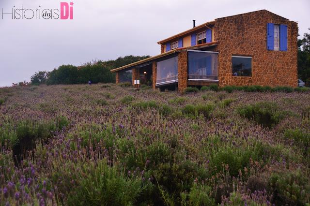 Casinha charmosa do Lavandário de Cunha