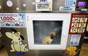 secadora para cães