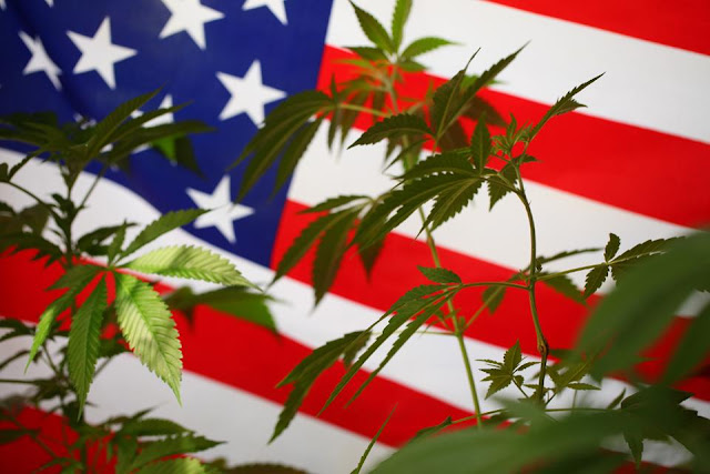Two Things Happening Right Now That Could Force U.S. Government To End Marijuana Prohibition