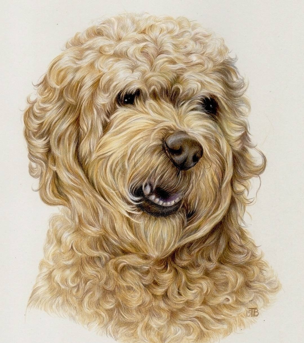 04-Dog-Tatjana-Bril-Domestic-and-Wild-Animal-Drawings-www-designstack-co
