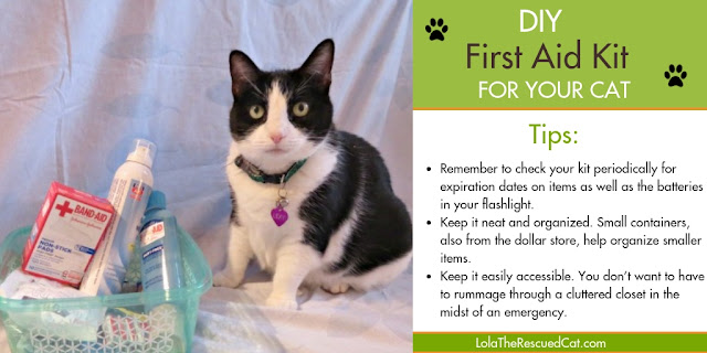 First Aid Kit For Your Cat|DIY first aid kit