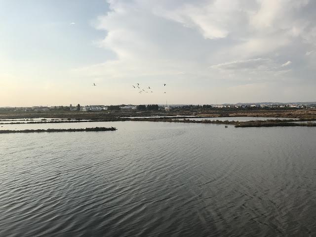 Salinas em Tavira