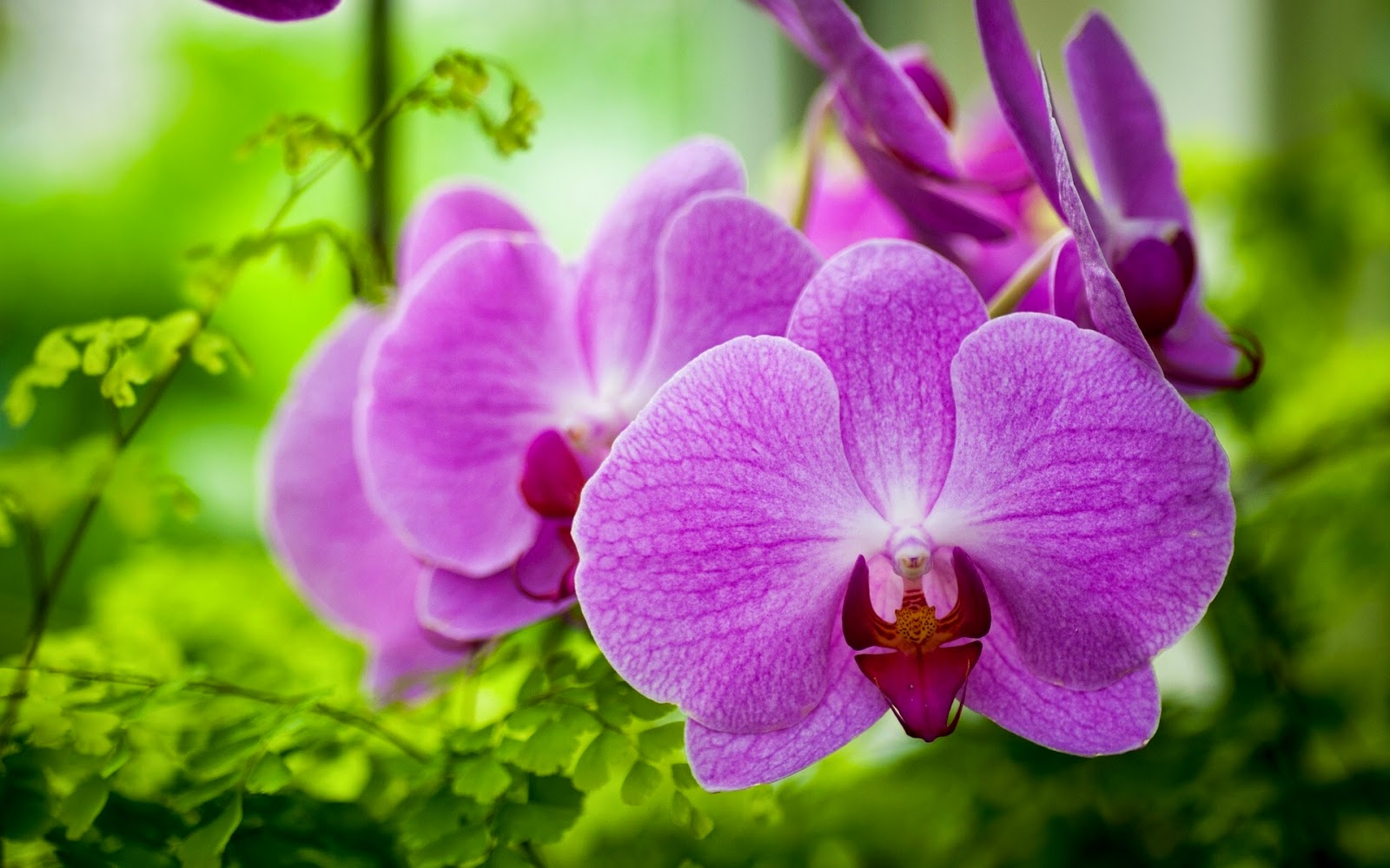 Purple-Orchid-flower-pictures-photo.jpg