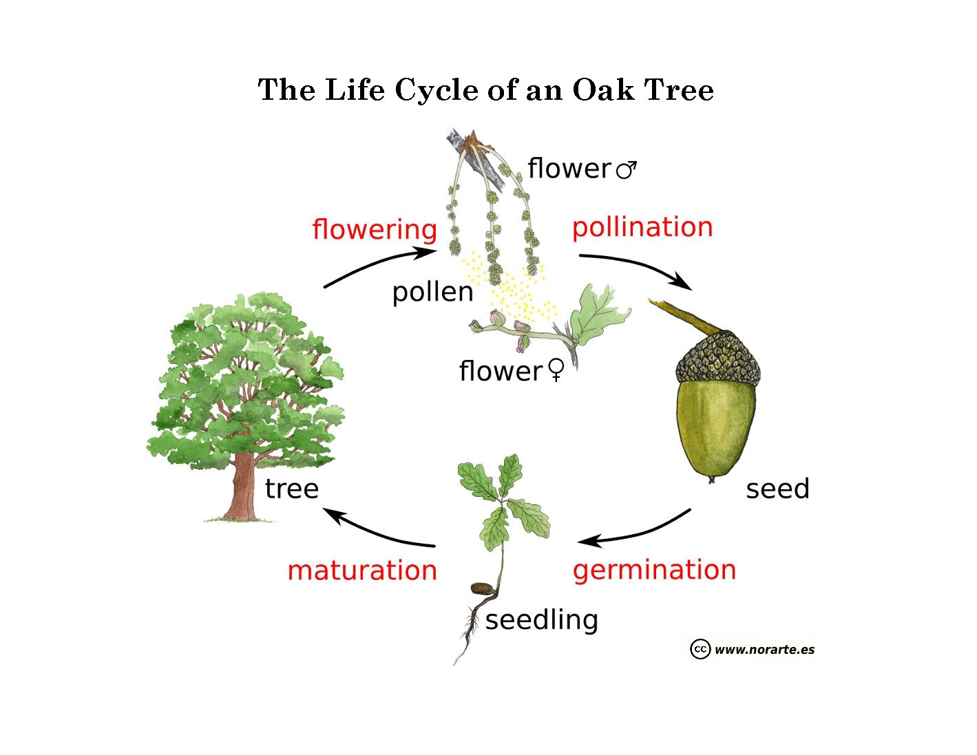 Learning Among The Oaks Nature Journal