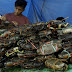 About Us : Live Fresh Mud Crabs Farming In Indonesia - Buy Fresh Mud Crab Meat Price