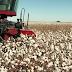 Oeste: produtores de algodão utilizam de tecnologia para manter liderança no cenário nacional