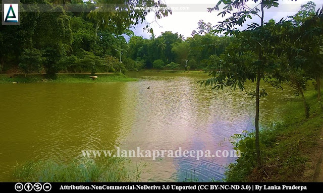Udugampola Ancient Pond, Gampaha
