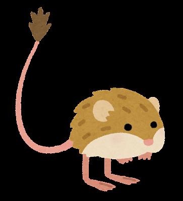 コミミトビネズミのイラスト