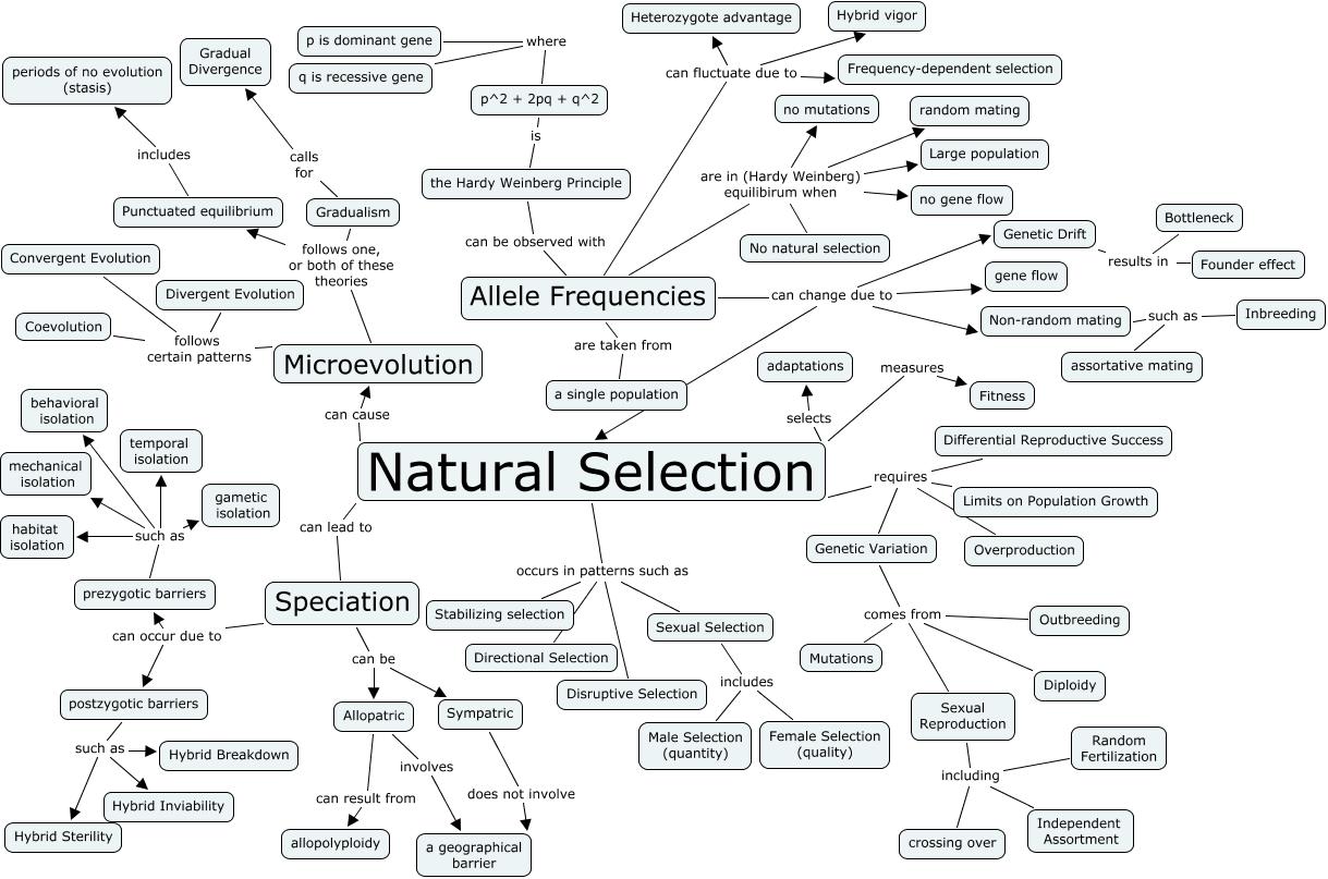Desafiando a Nomenklatura Científica: A seleção natural